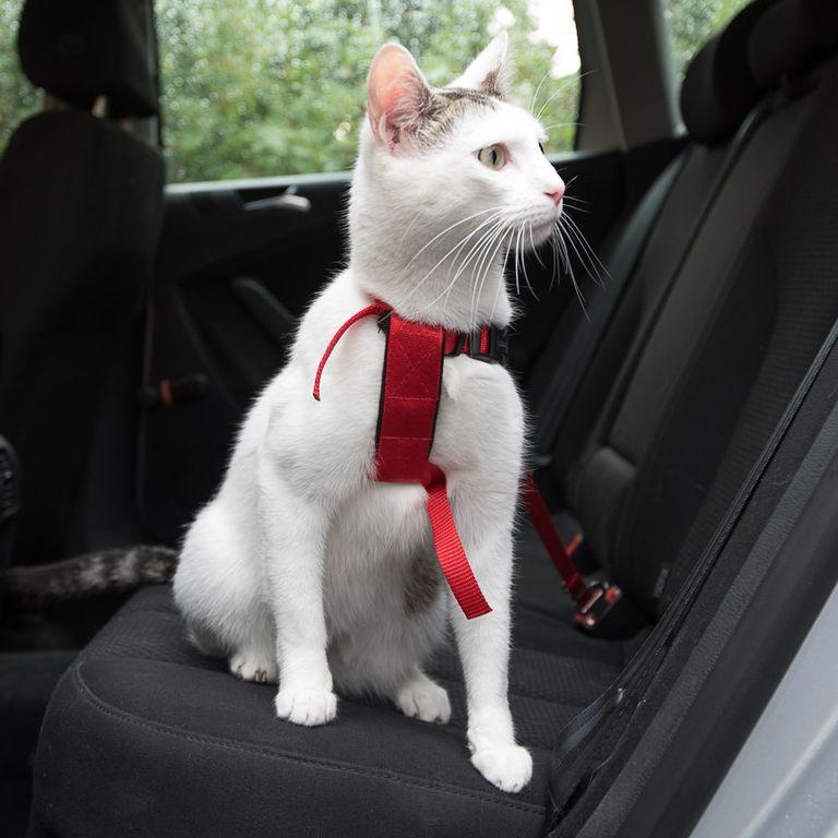 Ob auf Reisen oder dem Weg zum Tierarzt: Mit dem Trixie Auto-Geschirr für Katzen können Sie Ihren Liebling jederzeit sicher im Auto transportieren. Der Sicherheitsgurt lässt sich problemlos am Gurtschloss befestigen. Das Trixie Auto-Geschirr für Katzen lässt sich stufenlos ver...